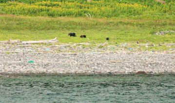 Mother with her two cubs close to shore.